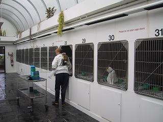 SPCA3
