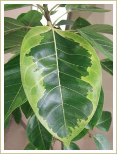 これ何という植物か分かりますか?