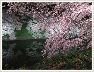 水鏡に映る桜