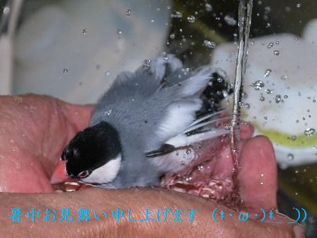 ふぶきの水浴び2