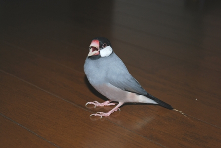 2008.9のぽぽ