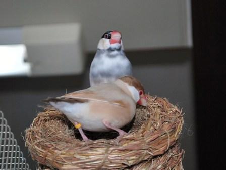 つぼ巣破壊