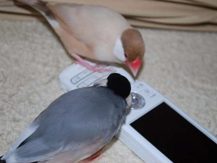 携帯と蓮斗とふぶき
