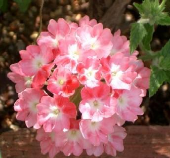 花手まり 2色花
