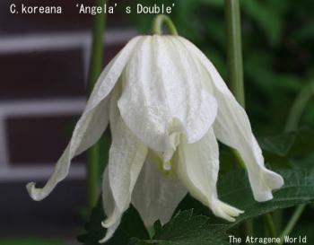 AngelasDouble21042009.jpg