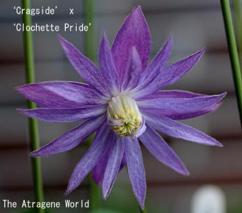 CragsidexClochettePride0505200901.jpg