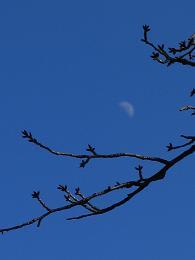 月をのせた枝