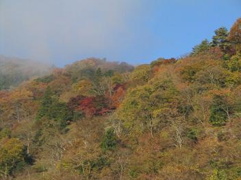 朝もやの中の紅葉