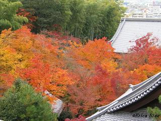 紅葉を俯瞰する