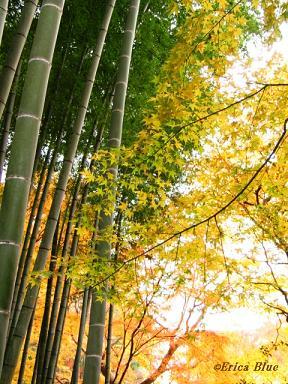 竹林と黄葉