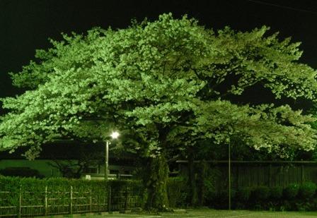 わたしの好きな樹