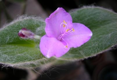 こんな植物