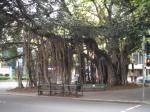 リバーサイドの木