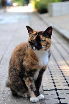 江ノ島ネコ