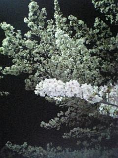 20070403035201