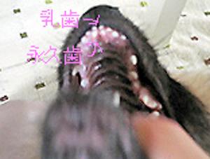 20060919144101.jpg