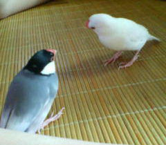 相容れない2羽