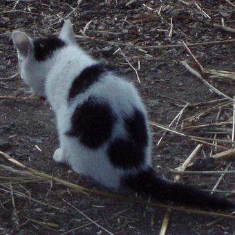 仔猫サンプル