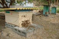 分蜂元巣箱