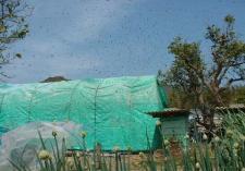 分蜂発生時