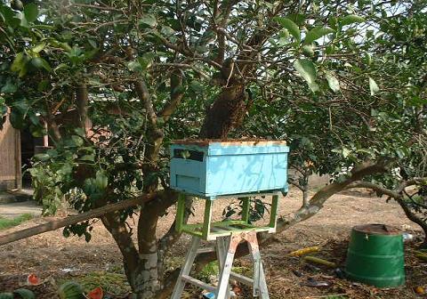 分蜂、収容