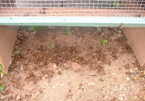 蜜蜂の被害