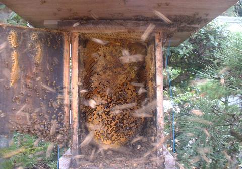 残した巣箱内の巣