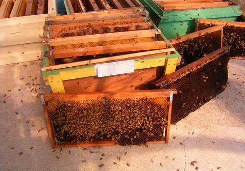 巣脾掃除、蜜蜂