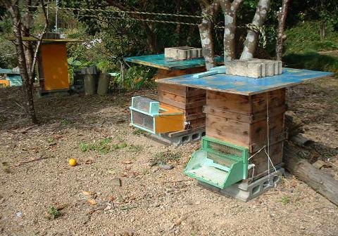 巣箱置場(和蜂)