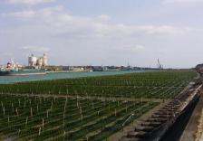 海苔養殖場