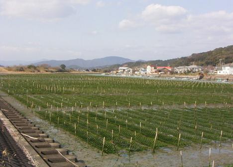 養殖場(下田)