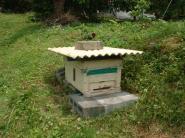 収容群設置(巣箱)