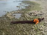 石ぐろ漁 網