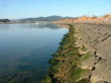 川岸(石張)青海苔