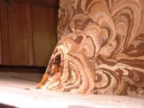 コガタスズメバチ巣アップ