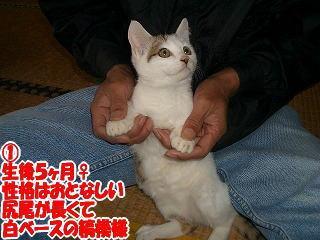 子猫ちゃん2