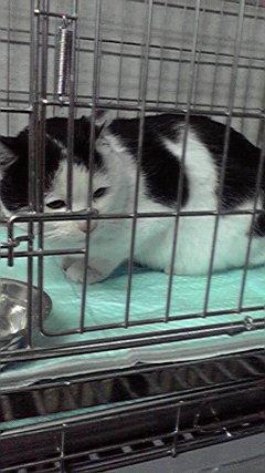 白黒猫ちゃん1