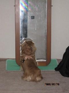 鏡がお気に入りのプリン