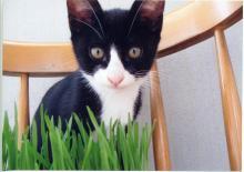 子猫1.jpg