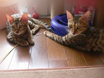 りく(左)&メルちゃん(右)