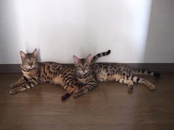 左:ルビィ/右:エル