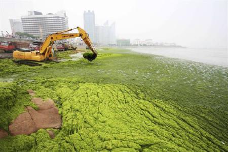 韓国海苔の原料