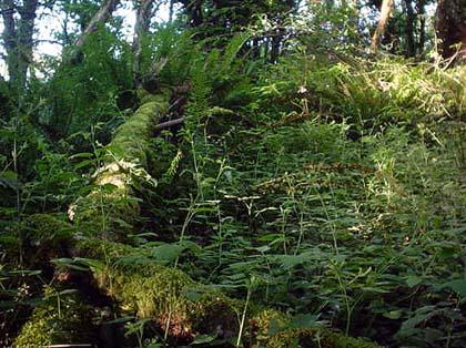 forest053105.50.jpg