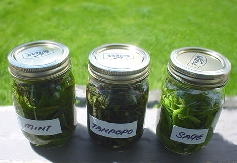 herb2.051805.50.jpg