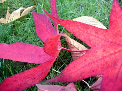 leaf111805