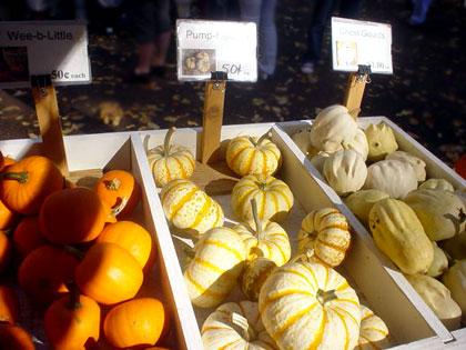 pumpkin102205