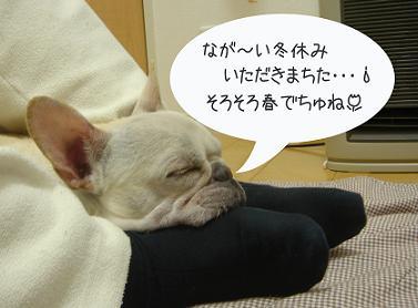冬眠から目覚めなきゃ!!