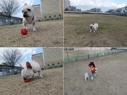 ママが久しぶりにボールを出してくれまちた♪