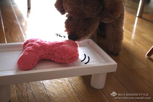 犬,テーブル
