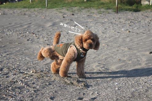 葉山,犬,散歩